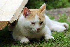 Czerwony i biały bezdomny kot śpi lekko na trawie w cieniu w lecie Obraz Royalty Free