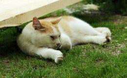 Czerwony i biały bezdomny kot śpi lekko na trawie w cieniu w lecie Zdjęcie Royalty Free