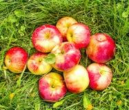 Czerwony jabłka kłamstwo na trawie Fotografia Royalty Free