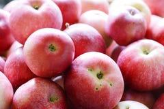 Czerwony jabłka tło Tło organicznie świezi czerwoni jabłka Rolny żniwo Fotografia Stock