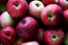 Czerwony jabłka tło Tło organicznie świezi czerwoni jabłka Rolny żniwo Zdjęcia Royalty Free