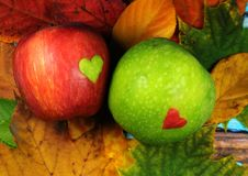 Czerwony jabłko z zielonym sercem i zieleni jabłkiem z czerwonym sercem Obraz Royalty Free