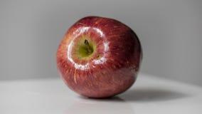Czerwony jabłko z wod kroplami na tle Zdjęcia Royalty Free