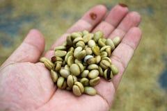 Czerwony jagody kawowej fasoli proces w fabryce Obrazy Royalty Free