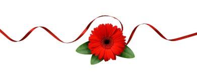 Czerwony jedwabniczy faborku i gerbera kwiat Obrazy Royalty Free