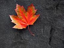 Czerwony jesień liść i czerni skała Zdjęcie Royalty Free