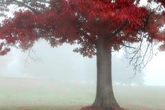 czerwony jesienią Zdjęcia Royalty Free