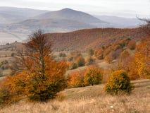 czerwony jesienią Zdjęcie Stock