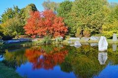 Czerwony jesieni drzewo stawem Zdjęcie Stock