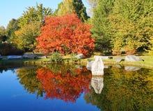 Czerwony jesieni drzewo stawem Zdjęcie Royalty Free