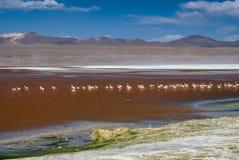 Czerwony jezioro Obraz Royalty Free
