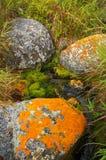 czerwony kamień wody zdjęcie royalty free