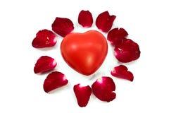 Czerwony kierowy środkowy płatek róży okrąg odizolowywający na bielu Fotografia Royalty Free