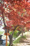 Czerwony klon z antykwarskim słupem w Japan Zdjęcie Stock