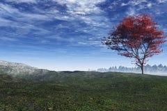 czerwony klonowy drzewo. Zdjęcia Royalty Free