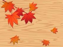 czerwony klonowy liściach drzewa Zdjęcie Stock