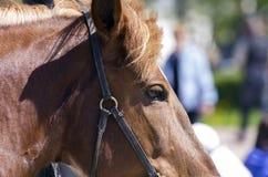 Czerwony koń Zdjęcie Stock