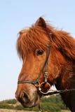 czerwony końska fotografia stock