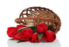 Czerwony kosz i tulipany Zdjęcie Stock