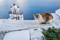Czerwony kot śpi na ścianie blisko morza Zdjęcia Royalty Free