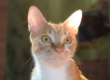 Czerwony kot Jaskrawy oświetlenie obraz stock