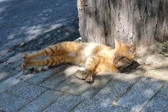 Czerwony kot kłama na kamiennym bruku Obrazy Stock
