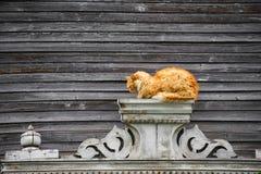 Czerwony kot na tle drewniany stary dom Obrazy Royalty Free