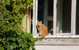 Czerwony kot na windowsill Obrazy Stock