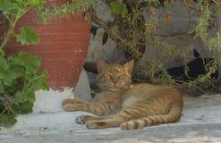 Czerwony kot odpoczywa w jardzie Zdjęcia Royalty Free