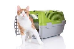 Czerwony kot patrzeje z zwierzę domowe przewoźnika Obrazy Royalty Free