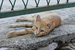 Czerwony kot pod ogrodzeniem obraz stock