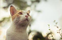Czerwony kot przyglądający z filtrowym skutkiem dla sieci up Obrazy Royalty Free