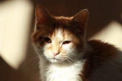 Czerwony kot siedzi ÑˆÑ 'i gapi się cień Zdjęcia Royalty Free