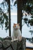 Czerwony kot siedzi na tle morze Zdjęcia Royalty Free