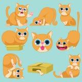 Czerwony kot w różnych emocjach Zdjęcia Royalty Free