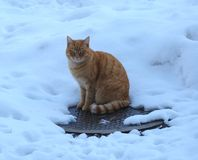 Czerwony kot wygrzewa się na manhole pokrywie w zimie obrazy stock