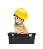 Czerwony kot z hełmem w toolbox Fotografia Stock