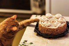 Czerwony kota cukierki kochanek zdjęcia stock