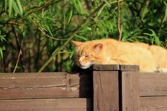 Czerwony kota dosypianie na ogrodzeniu Zdjęcia Stock