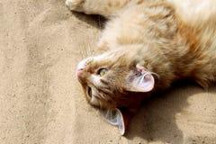 Czerwony kota lying on the beach na odpoczywać i piasku Zdjęcia Stock