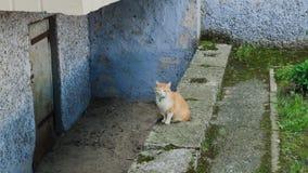 Czerwony kota obsiadanie blisko betonowego domu zbiory