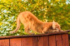 Czerwony kota obsiadanie Na ogrodzeniu Fotografia Stock