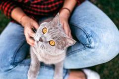 Czerwony kota obsiadanie na rękach dziewczyna Fotografia Stock