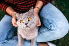 Czerwony kota obsiadanie na rękach dziewczyna Zdjęcia Stock