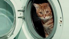 Czerwony kota obsiadanie w pralce 4K zdjęcie wideo