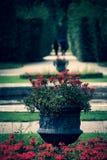 Czerwony Królewski widok obrazy royalty free