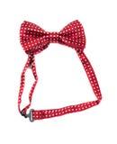 czerwony krawat bow Biały tło Obrazy Stock