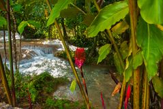 Czerwony kwiat blisko siklawy Agua Azul, Chiapas, Palenque, Meksyk Obrazy Royalty Free