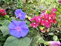 Czerwony kwiat i błękit Obrazy Stock