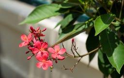 Czerwony kwiat i drzewo Obrazy Stock